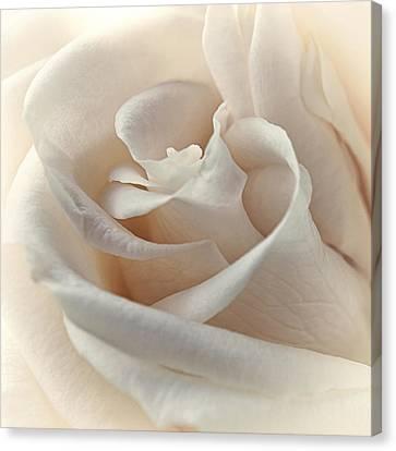 Peaches N Cream Canvas Print by Darlene Kwiatkowski