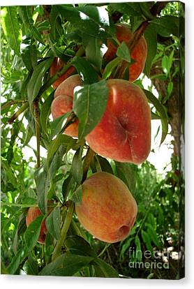 Canvas Print featuring the photograph Peaches On The Tree by Kerri Mortenson