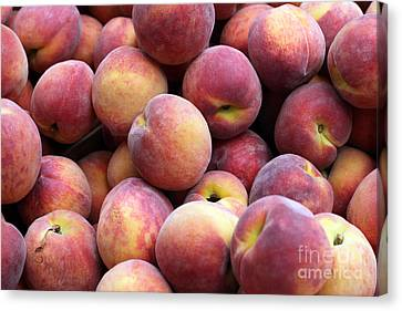 Peachy Canvas Print by Denise Pohl
