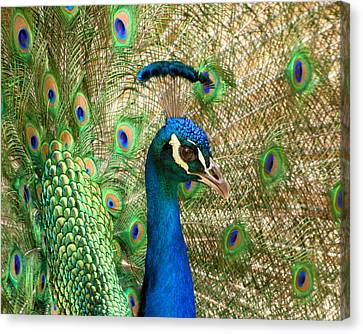 Canvas Print featuring the photograph Peacock 1 by Bob and Jan Shriner