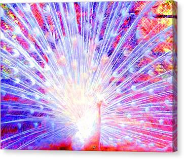 Peacock Blue Canvas Print by Tony Rubino