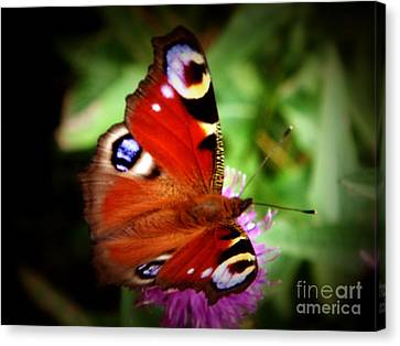 Peacock Butterfly Canvas Print by Yvonne Johnstone