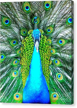 Peacock Face On Canvas Print