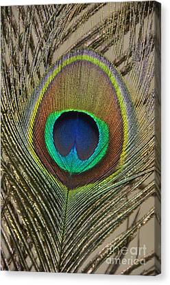 Peacock Feather Canvas Print by Debra Thompson
