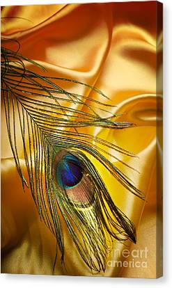 Abstract Nature Canvas Print - Peacock Feather by Jelena Jovanovic