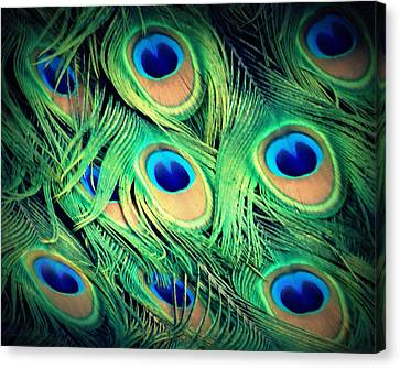 Peacock Feathers Canvas Print by David Mckinney