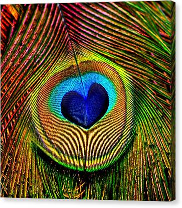 Canvas Print featuring the photograph Peacock Feathers Eye Of Love by Tracie Kaska