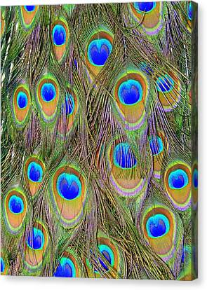 Canvas Print featuring the photograph Peacock Feathers by Ramona Johnston