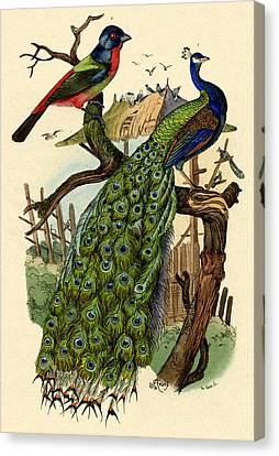 Peacock Canvas Print by French School