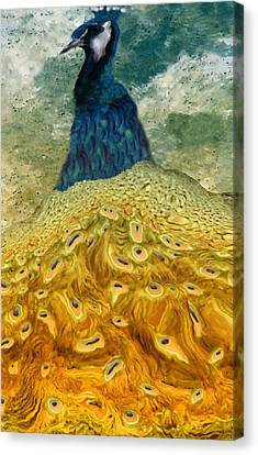 Punjab Canvas Print - Peacock by Jack Zulli