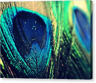 Peacock Canvas Print by Mlle Marquee
