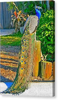 Peacock On The Stump Canvas Print by Joan McArthur