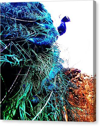 Canvas Print featuring the photograph Peacock Portrait by Vanessa Palomino