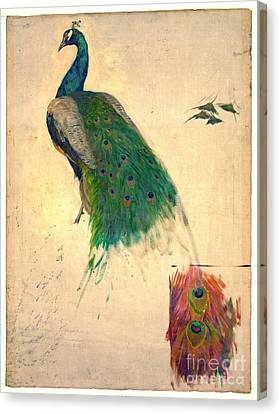 Peacock Study 1896 Canvas Print by Padre Art