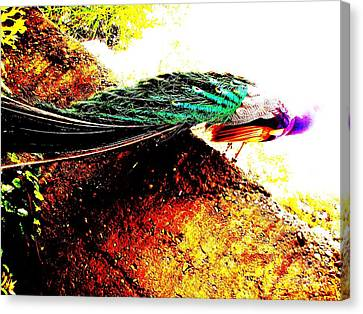 Canvas Print featuring the photograph Peacock Tail by Vanessa Palomino
