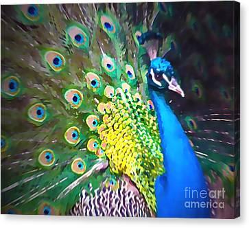 Peacock Canvas Print by Tatjana Popovska