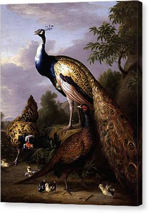 Canvas Print featuring the digital art Peacock by Tobias Stranover