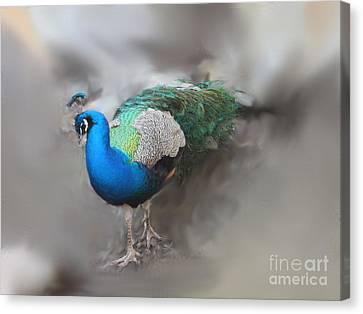 Peacock2 Canvas Print
