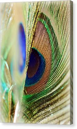 Peacocks Dance The Samba Canvas Print by Lisa Knechtel
