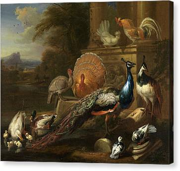 Peacocks, Doves, Turkeys, Chickens And Ducks By A Classical Canvas Print by Litz Collection