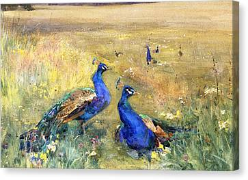 Peacocks In A Field Canvas Print by Mildred Anne Butler