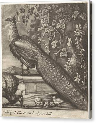Peacocks, Jan Griffier I, John Oliver Canvas Print