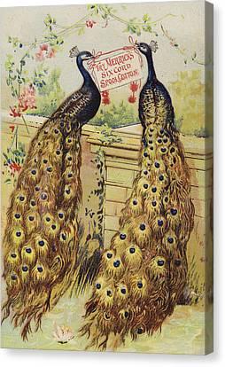 Peacocks Sitting On Wall Canvas Print by American School