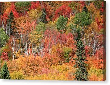 Riviere Canvas Print - Peak Autumn Colors by Pierre Leclerc Photography