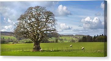 Peak District Tree Canvas Print