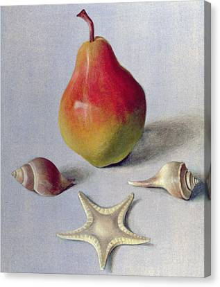 Pear And Shells Canvas Print