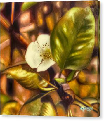 Pear Blossom Canvas Print by Melissa Herrin