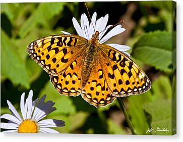 Canvas Print featuring the photograph Pearl Border Fritillary Butterfly On An Aster Bloom by Jeff Goulden