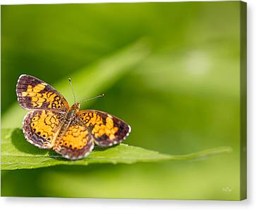 Pearl Crescent Notecard Canvas Print