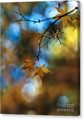 Pearlescent Acers Canvas Print by Mike Reid