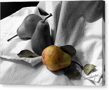 Pears - A Still Life Canvas Print by Terri Harper