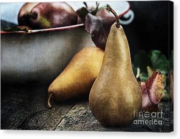 Pears Canvas Print by Stephanie Frey