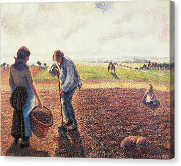 Peasants In The Field Eragny Canvas Print by Camille Pissarro