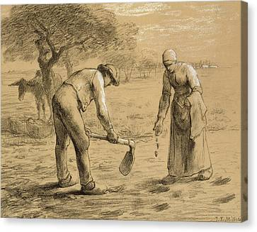 Peasants Planting Potatoes  Canvas Print by Jean-Francois Millet