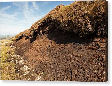 Peat Hags On King Bank Head Canvas Print by Ashley Cooper