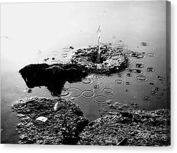 Pebble Splash Canvas Print by David Stewart