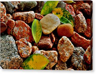 Canvas Print featuring the photograph Pebbles And Leaves by Marwan Khoury