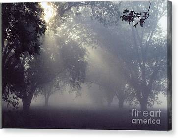 Pecan Grove On A May Morning Canvas Print by Debbie Bailey