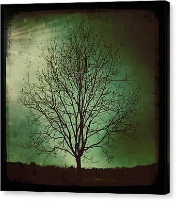 Pecan Tree Canvas Print by Sarah Coppola