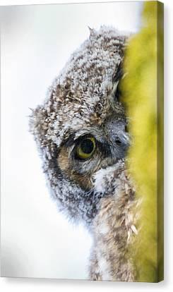 Peek A Boo Baby Owl Canvas Print