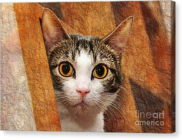 Peek A Boo I See You Canvas Print by Andee Design