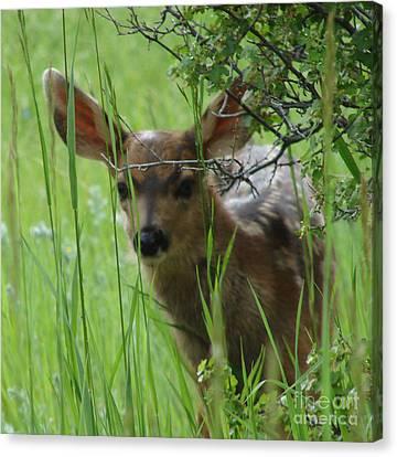 Playing Peek A Boo In Evergreen Colorado Canvas Print