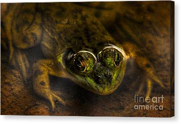 Canvas Print featuring the photograph Peek A Boo by Sam Rosen