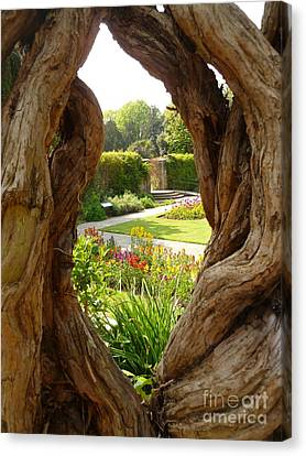 Canvas Print featuring the photograph Peek At The Garden by Vicki Spindler