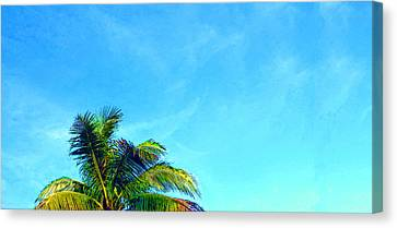 Peekaboo Palm - Tropical Art By Sharon Cummings Canvas Print by Sharon Cummings