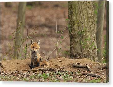 Peeking From The Fox Hole Canvas Print by Everet Regal